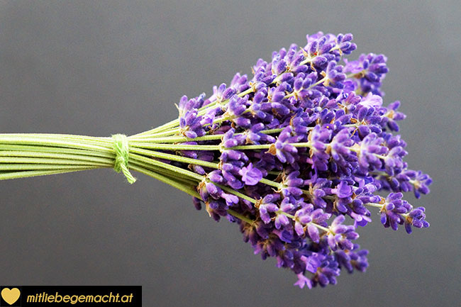 Bündel Lavendelblüten