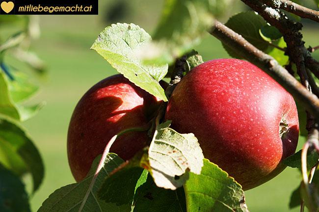 rote, saftige Äpfel