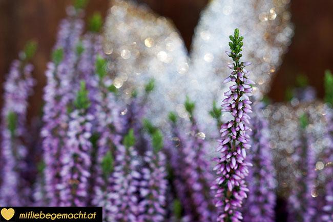 Goldene Blätter als Blumenstecker