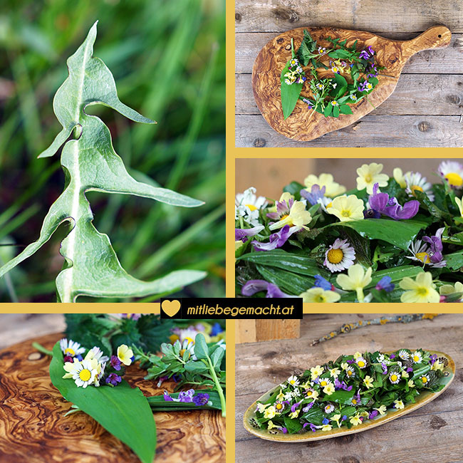 Wildkräutersalat selber machen