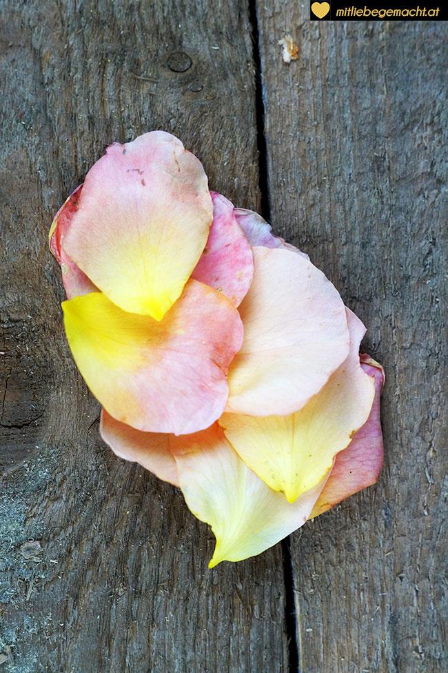 Rosenblätter einer Duftrose