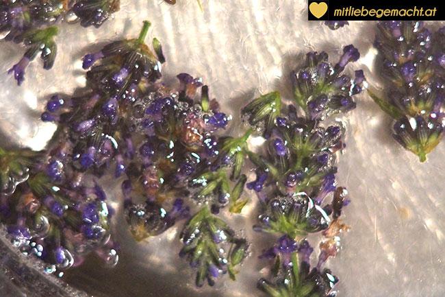 Lavendelblüten ins Zuckerwasser geben