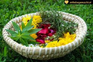 Was macht ihr aus euren gesammelten Blüten und Kräuter?