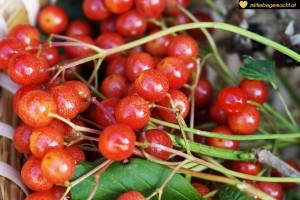 Beeren findet man viele im Herbst