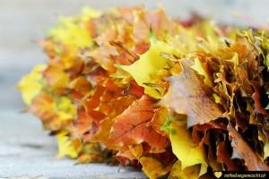 der Blätterkranz wächst und wächst