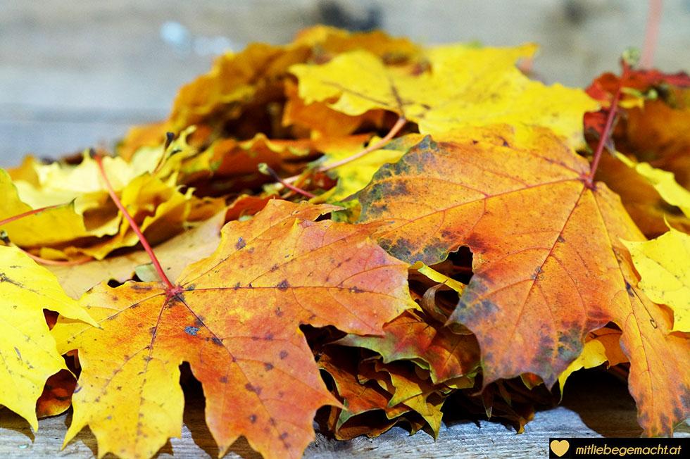 viele bunte Blätter