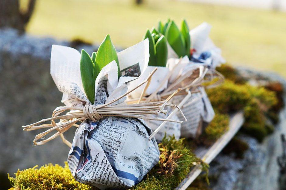 Frühlingsdeko frühlingsdeko für eilige hyazinthen zeitungspapier in szene
