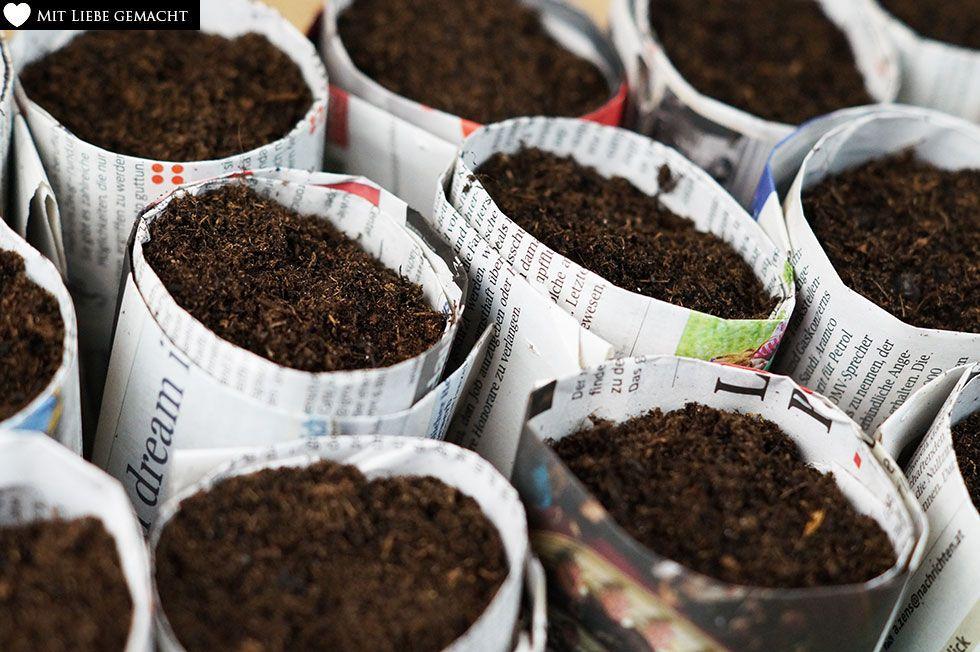 Anzuchttöpfchen aus Zeitungspapier mit Erde befüllt