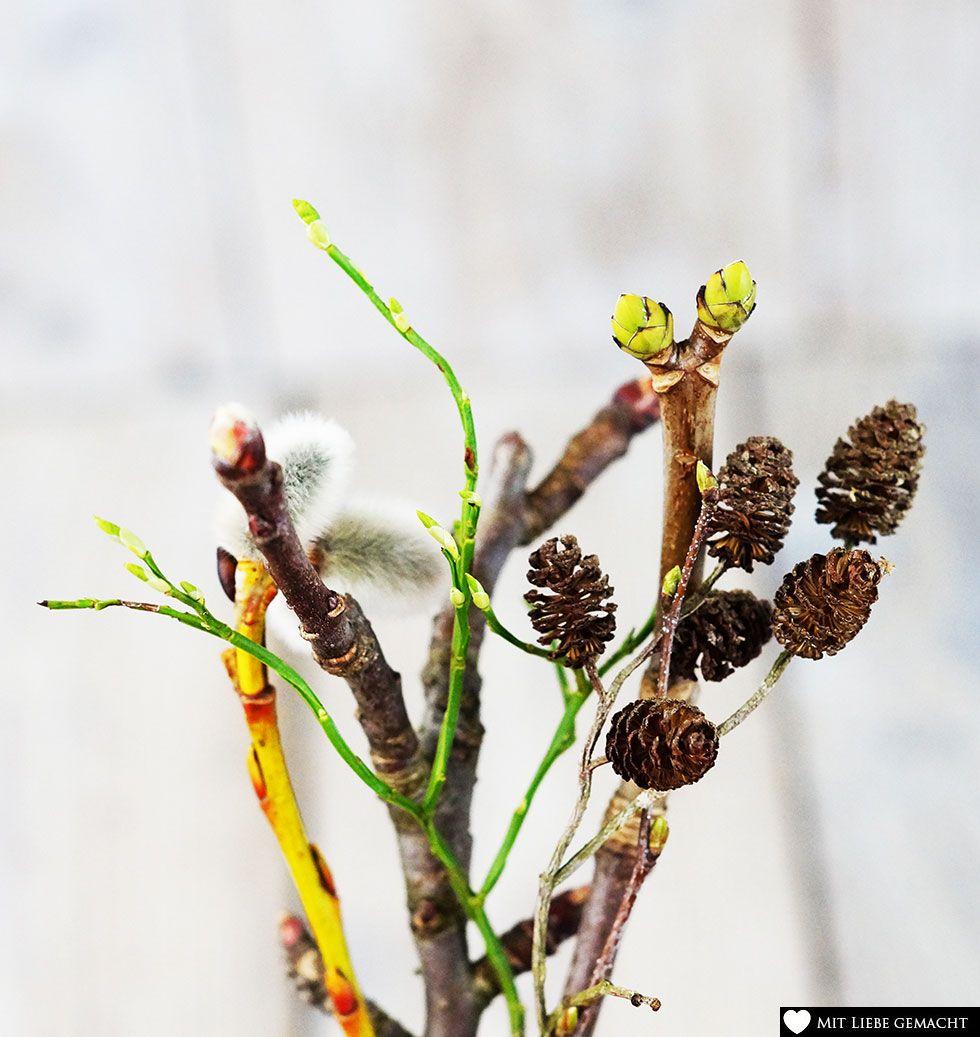 die Vielfalt der Knospen und Pflanzenteile