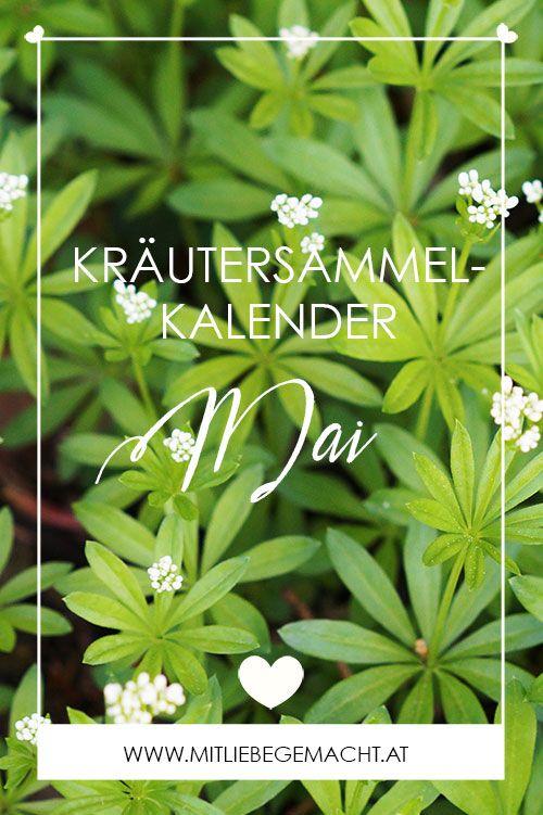 der neue Kräutersammelkalender für den Monat Mai
