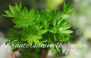Kräutersammelkalender Mai