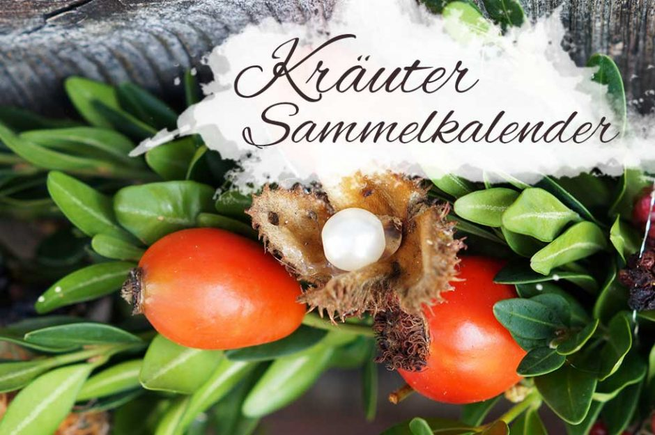 Kräutersammelkalender September