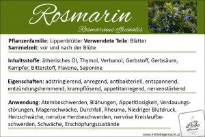 Rosmarin Lernkarte Kräuterwissen