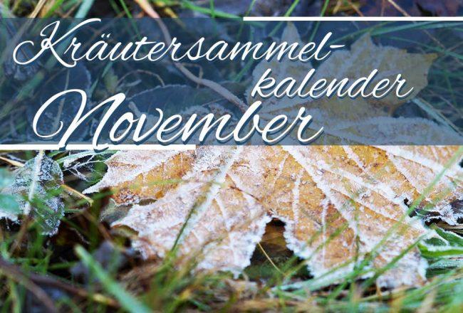 Kräutersammelkalender November