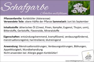 Schafgarbe Lernkarte