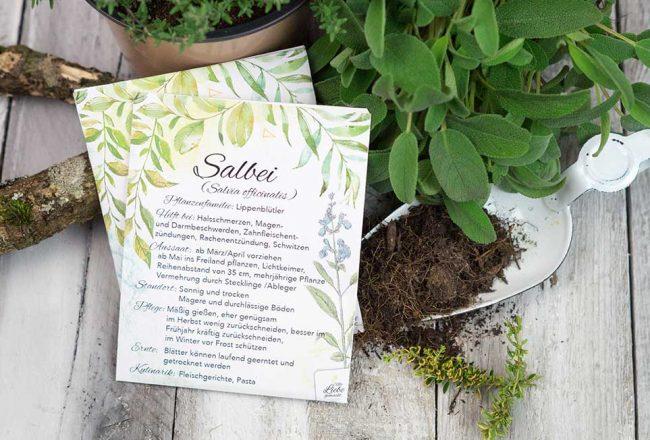Kräutergarten für die Hausapotheke