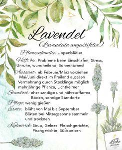 Lavendel mit seinem beruhigenden Duft