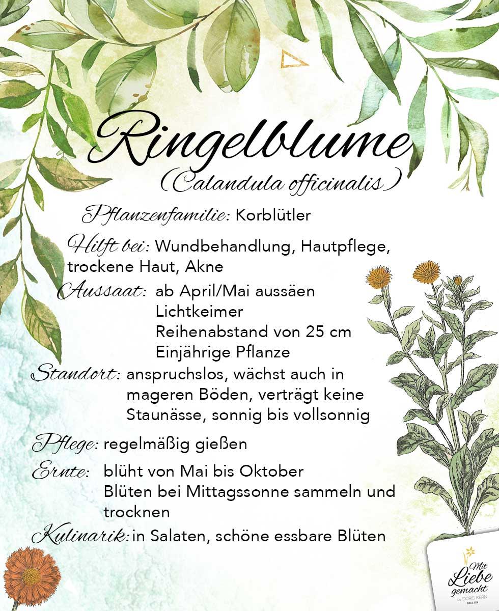 Ringelblume - eine typische Blumen aus einem Bauerngarten