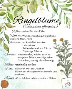 Ringelblume - die Wundheilerin