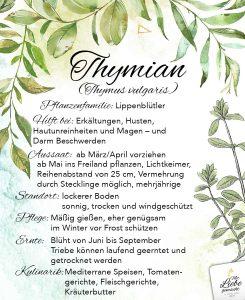 Thymian - die Pflanze bei Husten und Erkältungen
