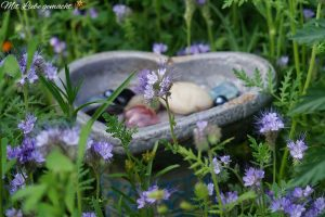 kleine Aufmerksamkeit für unsere Insekten