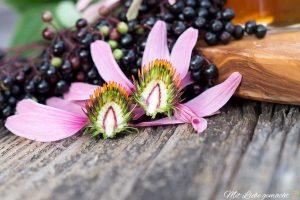 stachelige Blütenköpfe