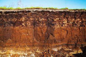 Moorwiese mit den verschiedenen Schichten