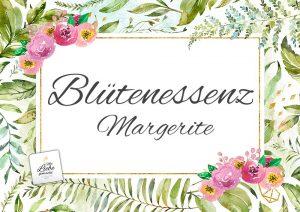 Blütenessenz Margerite