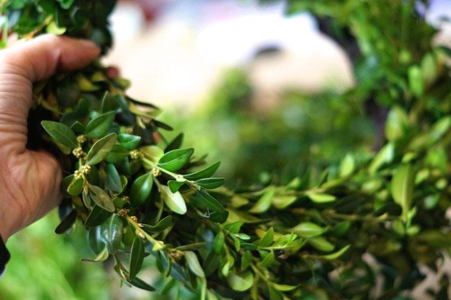 Hasenkörper aus Buchsbaum