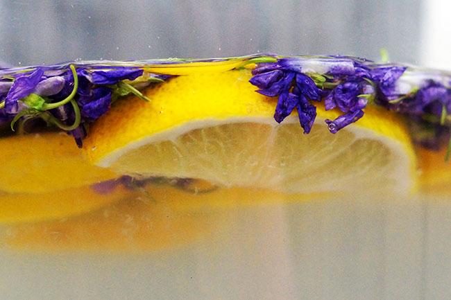 Veilchenansatz mit Zuckerwasser
