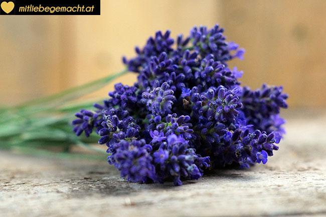 Bündel Lavendel