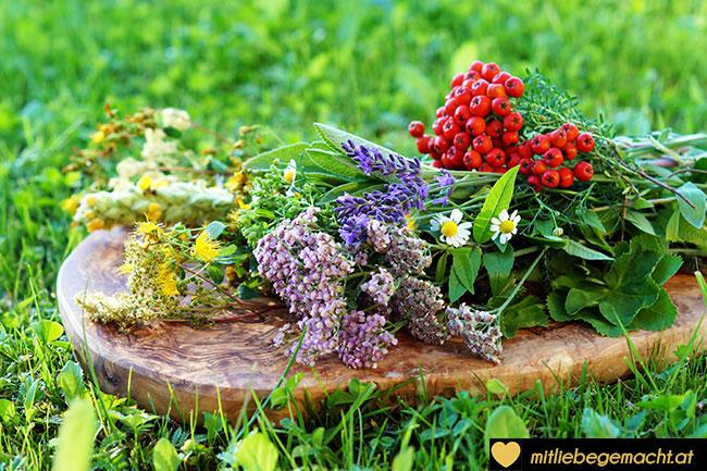 gesammelte Kräuter für den Kräuterbuschen