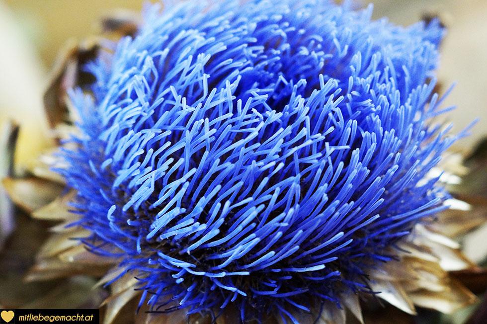 Artischockenblüte mit den feinen blauen Blüten