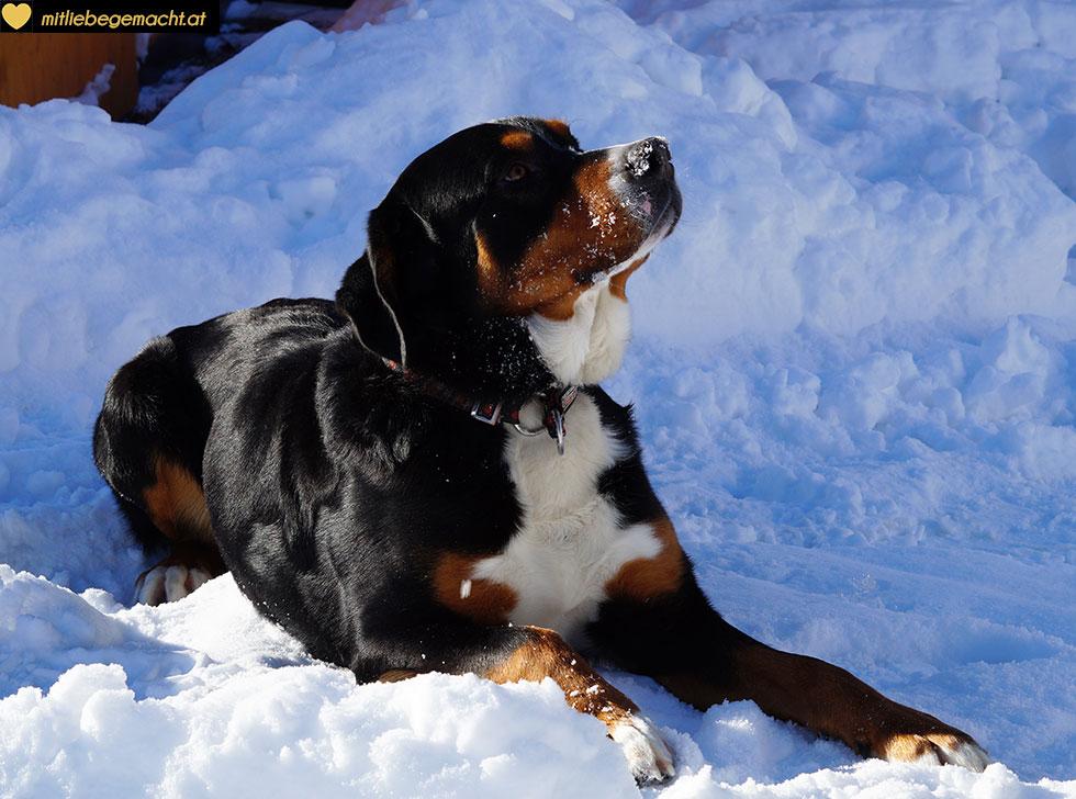 Herumtollen im Schnee ist für Hunde einfach schön