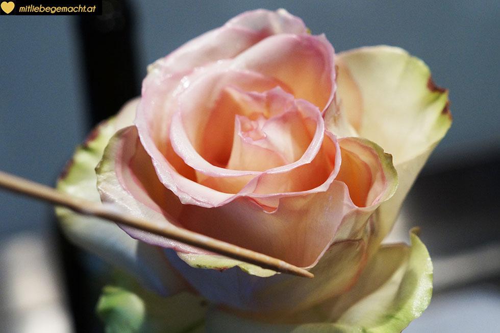 einzelne Rosenblätter ausrichten