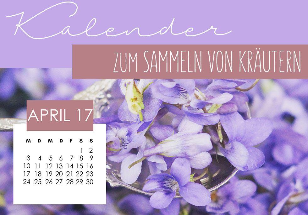 Kräutersammelkalender April