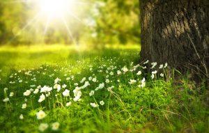 Tipps gegen die Frühjahrsmüdigkeit