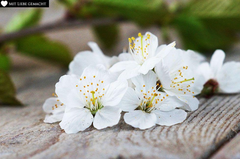 Kirschblüten für das natürliche Deo