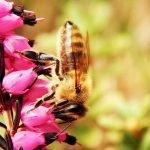 genügend Bienenfutter bereitstellen