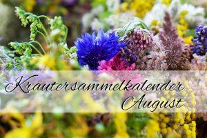 Kräutersammelkalender August