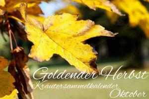Kräutersammelkalender Oktober