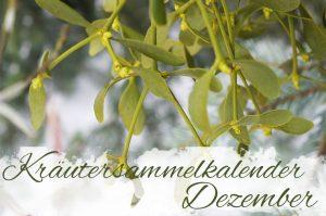 Kräutersammelkalender Dezember