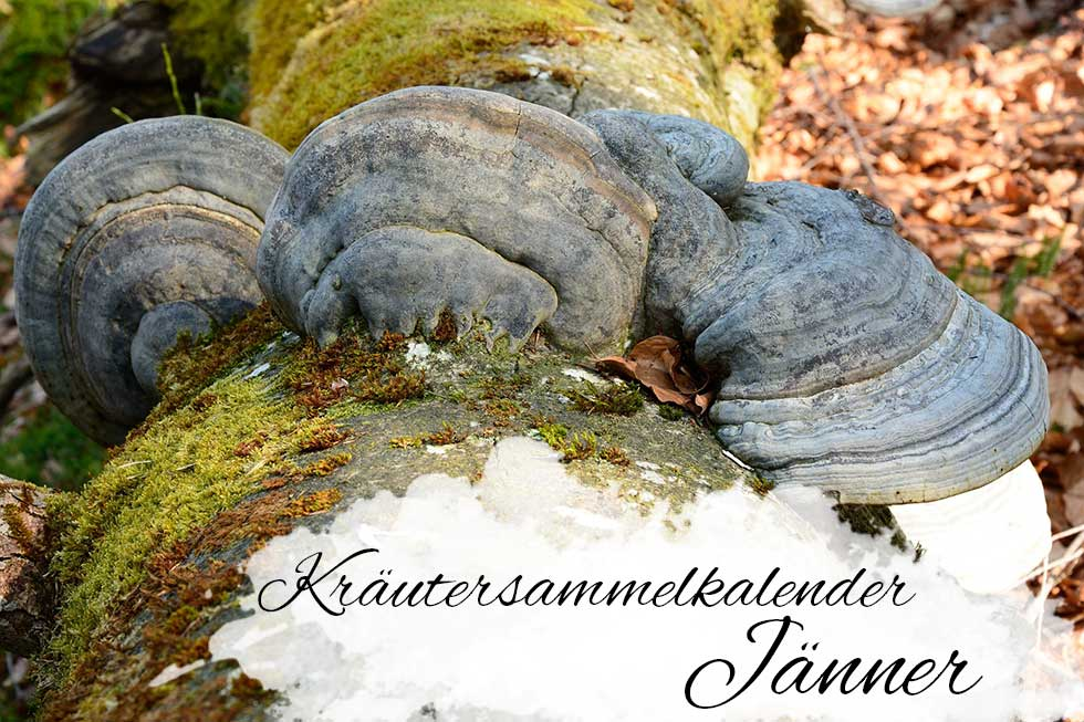 Kräuterkalender Jänner