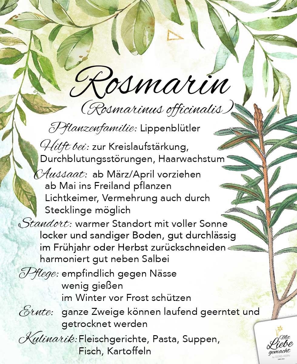 Rosmarin - ein belebendes Kraut