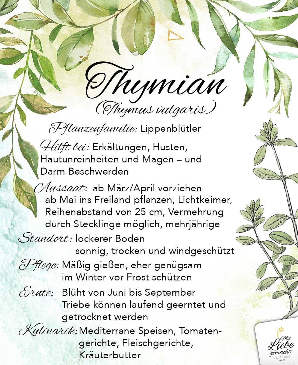 Thymian – die Pflanze bei Husten und Erkältungen