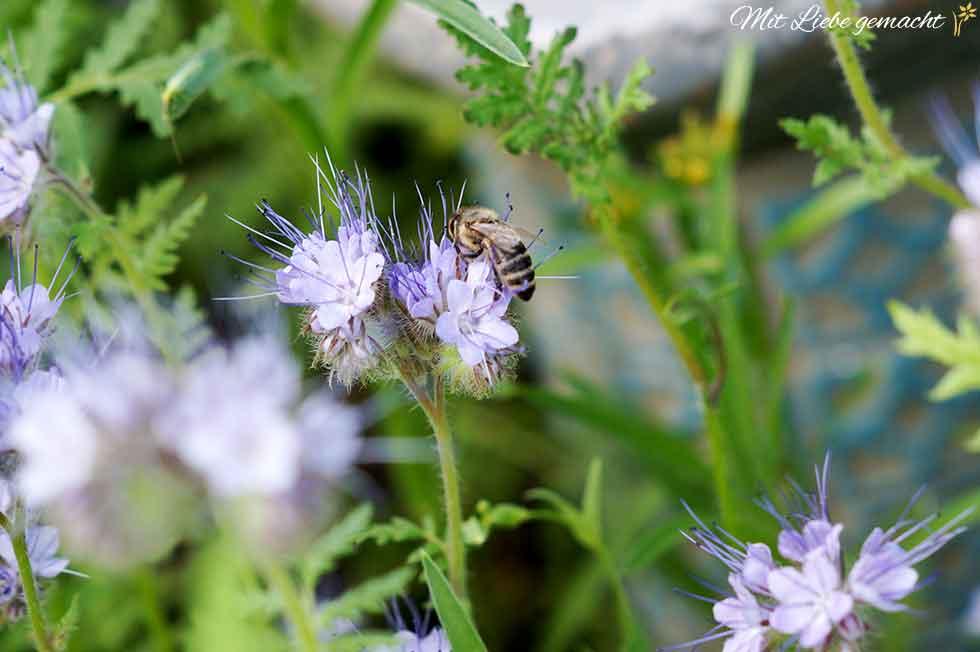 Platz für viele Insekten