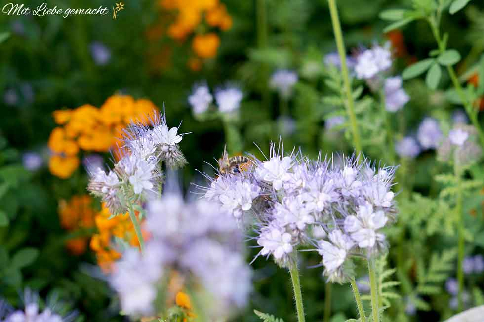 wunderschön und Nahrung für viele Insekten
