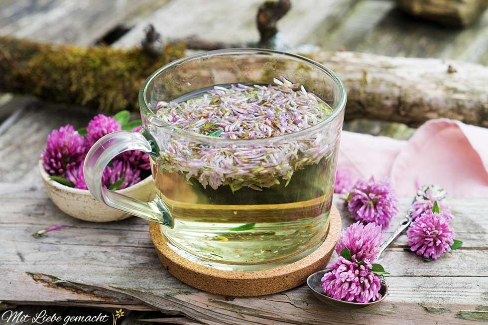 Rotklee Tee - hilft bei vielen Beschwerden