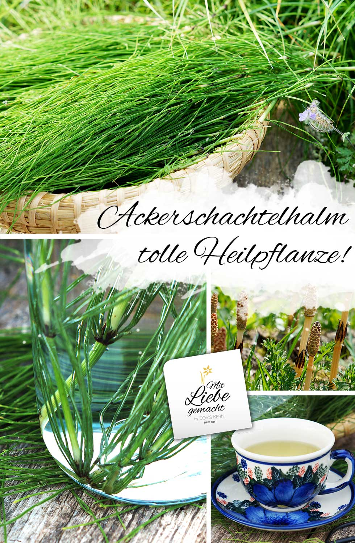 Ackerschachtelhalm - vielseitige Heilpflanze