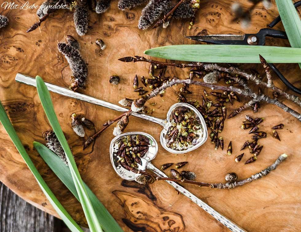 Heilsames aus dem Wald: Baumknospen
